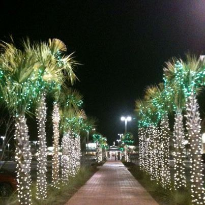 Lights in the Lowcountry!