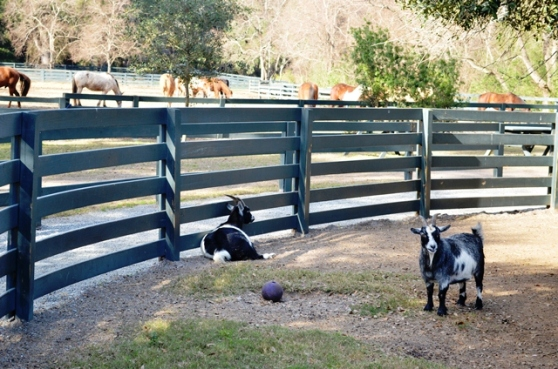 Lawton Stables Petting Zoo