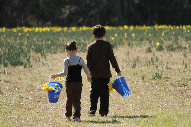 Photo courtesy of U-Pick-Daffodils
