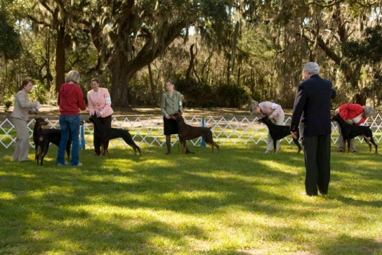 Photo Courtesy of the Hilton Head Kennel Club