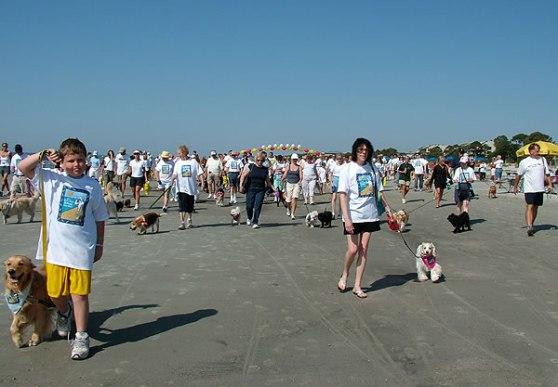 dog_walk2