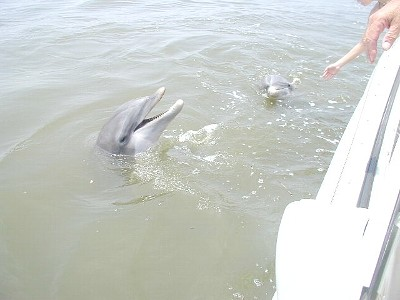 dolphgin