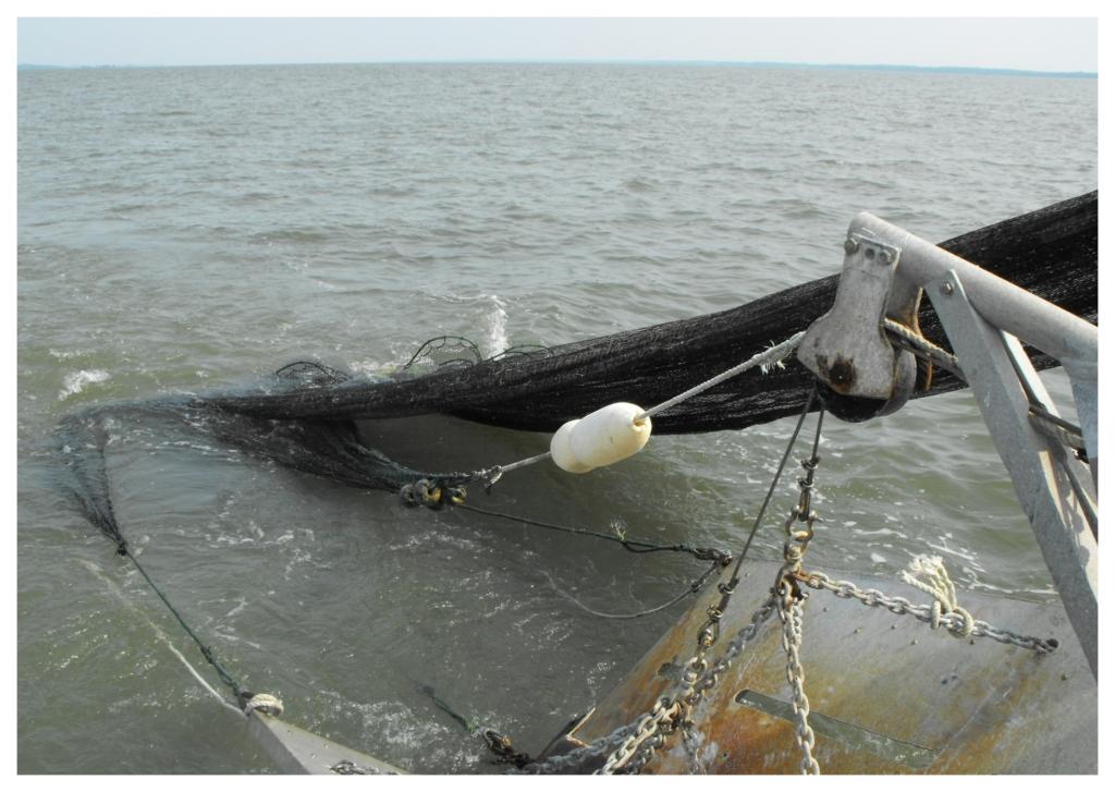 Shrimp Trawling 2