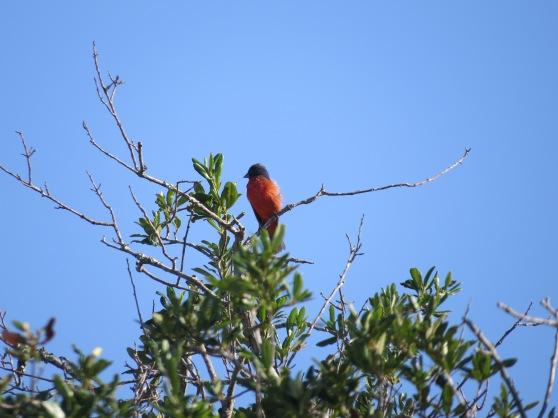 Birding Hilton Head