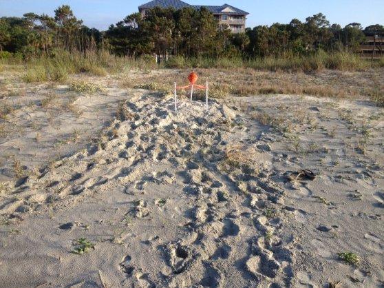 Turtle Nest  Hilton Head