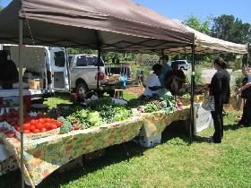 Shelter Cove Farmer's Market