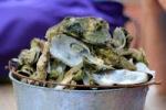 Oyster Roast
