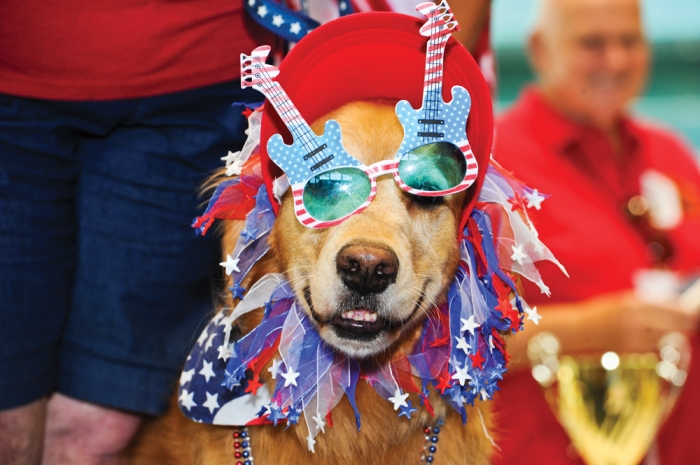dog in parade