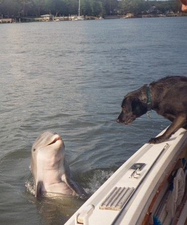 dolphin and dog