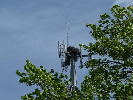 osprey nest tower