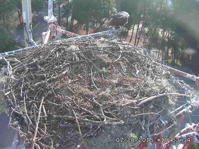 Osprey Cam!