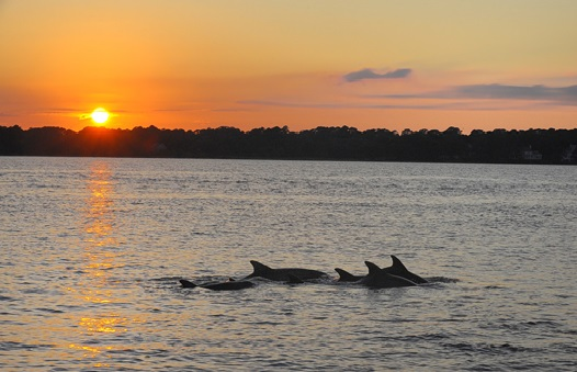 sunset_dolphins_brackett