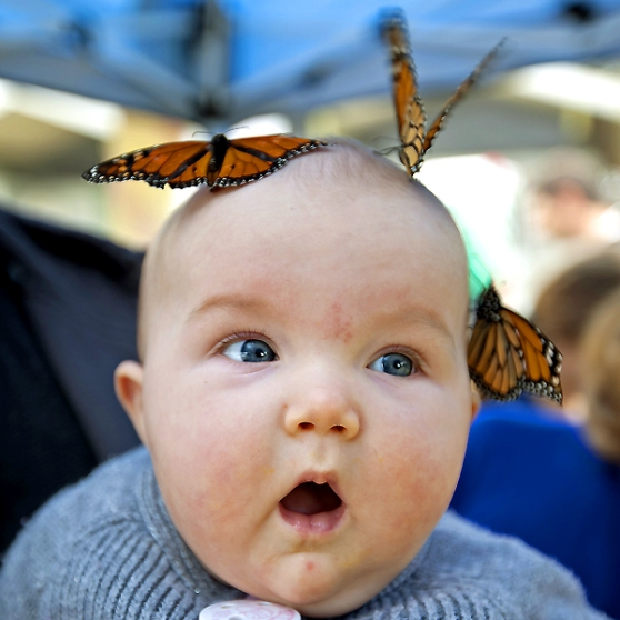 baby with butterflies
