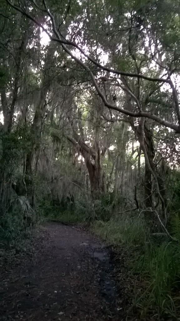 fp dark path