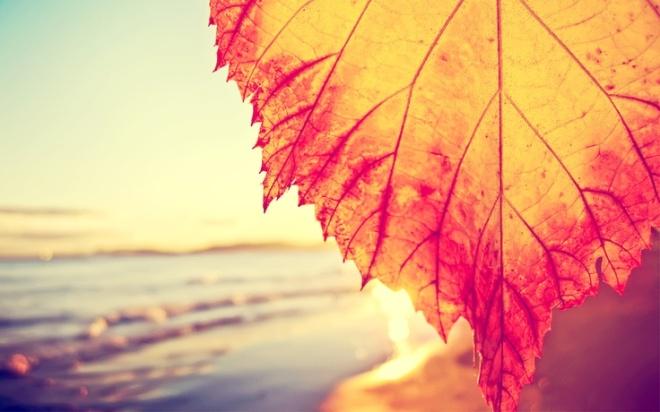autumn leaf-beach