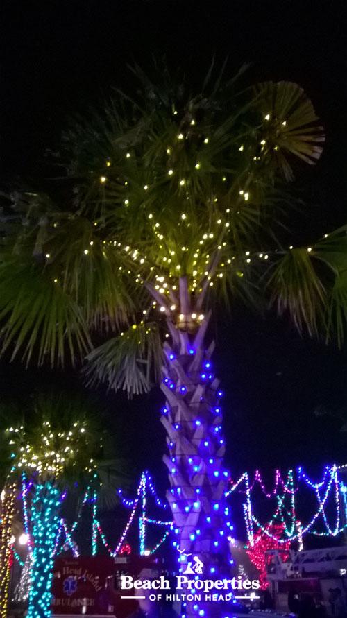 xmas palm