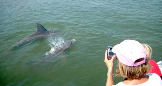 dolphin_photos_up_close_2.jpg