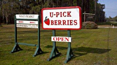 dempseyberries
