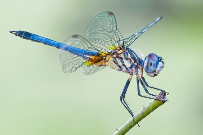 dragonfly-lead.jpg.653x0_q80_crop-smart.jpg