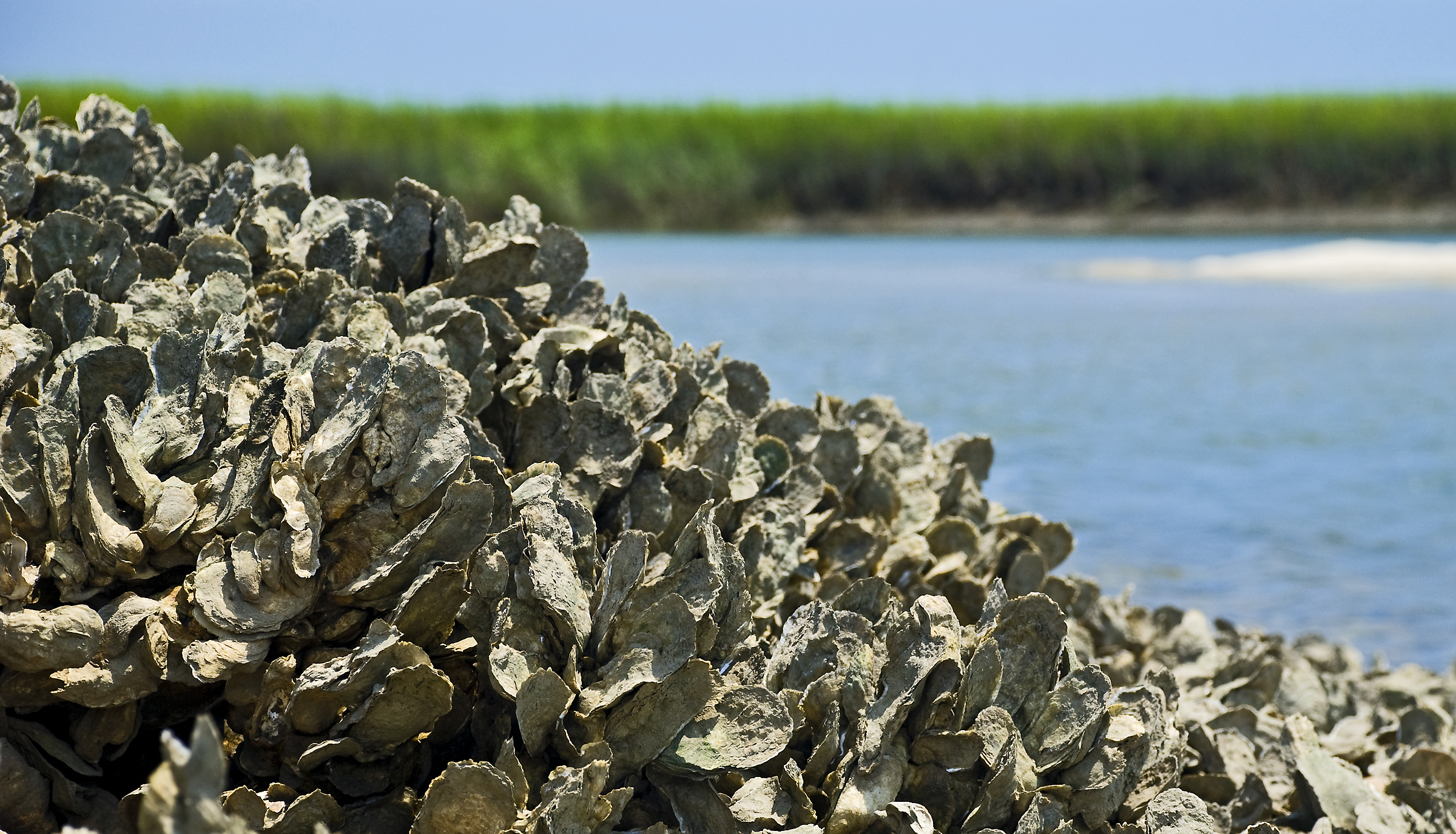 oyster-research.jpg