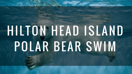 hilton head islandpolar bear swim.png