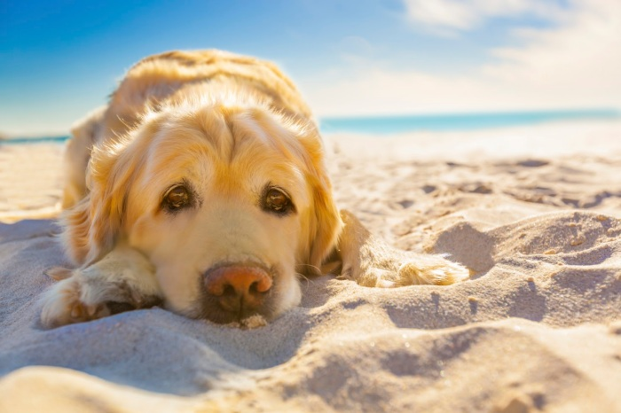 10-Beach-Safety-Tips-for-Dogs