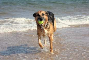dog-at-beach-1217208