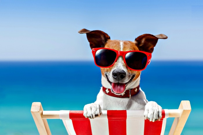 shutterstock_193526546dog-in-sunglasses.szd_